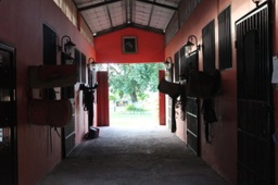 14 Horse stables